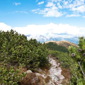 Zirben begleiten unterhalb der Baumgrenze den Weg der Wanderer - ©bergleben.de / Matteo Gariglio