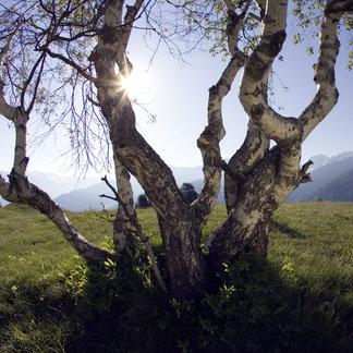 Trailrunning in Serfaus-Fiss-Ladis - ©Serfaus-Fiss-Ladis