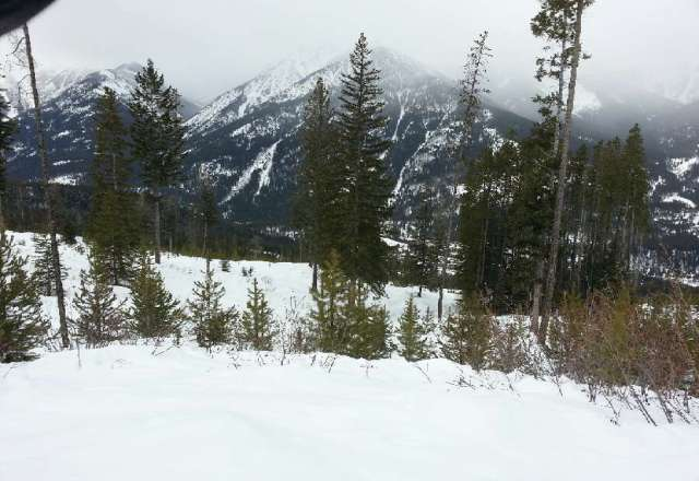 A dusting of snow overnight. There's still some untouched snow in the glades we found today. Snow is better at the summit