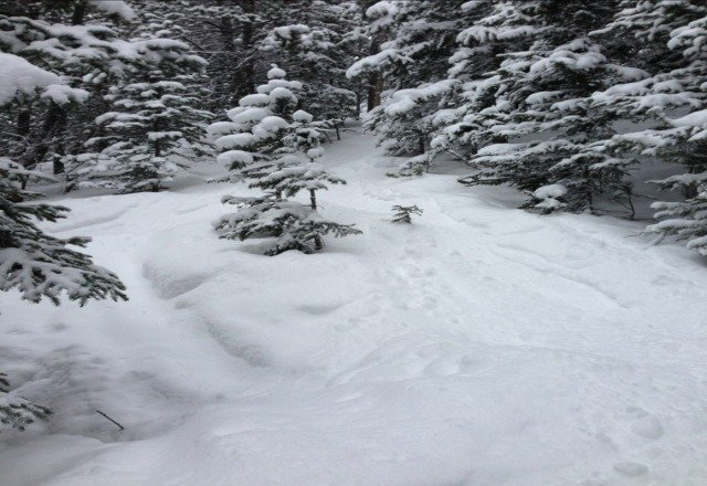 awesome pow in the trees on thursday.