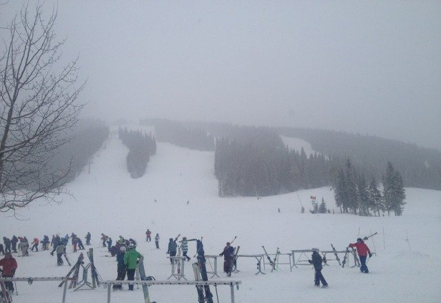 AMAZING POWDER! No lines at super bee