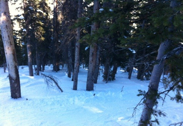sick tree stash deep in mary jane. still has powder. not riden much