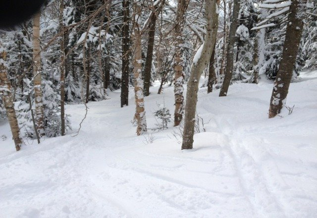 Fresh powder in the woods