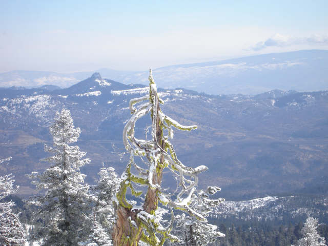 Snowy treetops above Mount Ashland