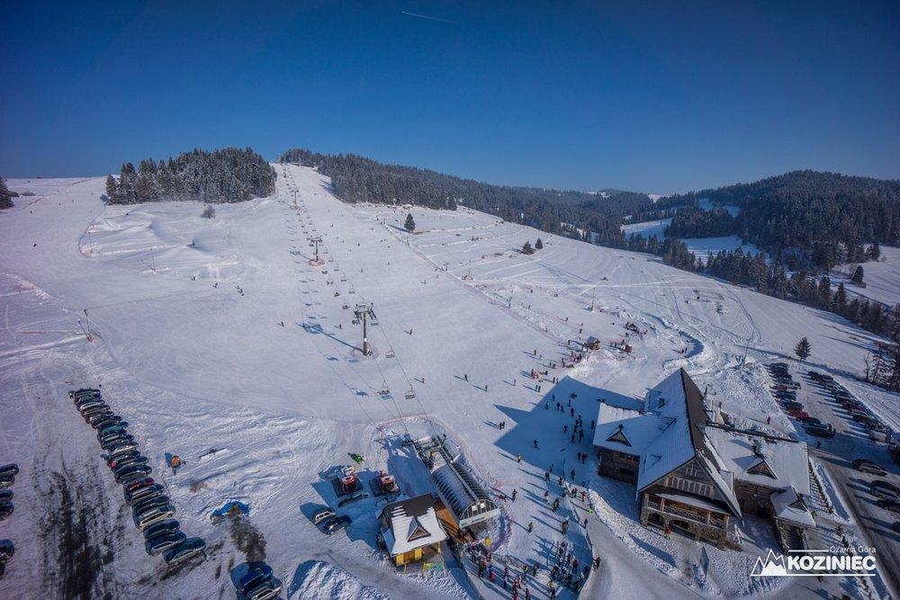 Koziniec ski
