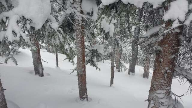 Amazing pow everywhere, but trees were unreal.