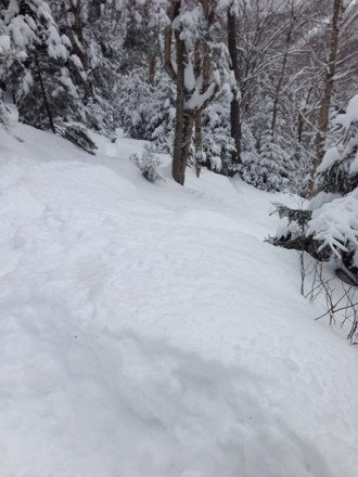 Got a bunch of pow last night. Was up to my waist in it at times in the glades at times