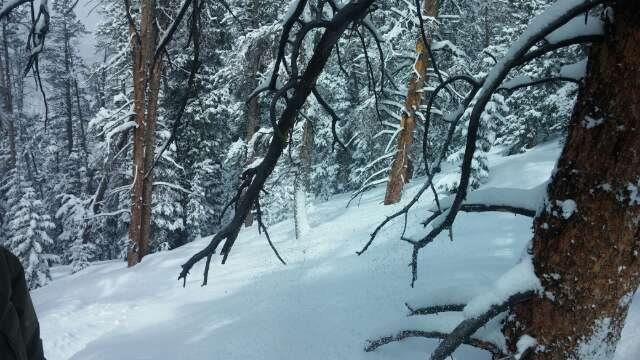 crazy pow, best day all season..