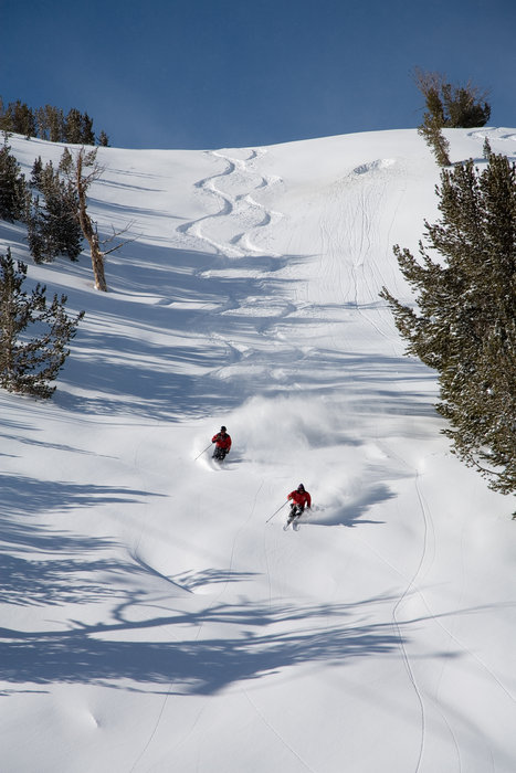 A glorious powder day on Mammoth-owned and neighbor ski area, June Mountain.  - ©Peter Morning