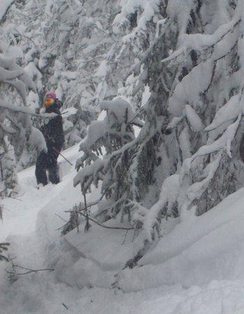 skogskjøring - ©SwedishDelight @ Skiinfo Lounge