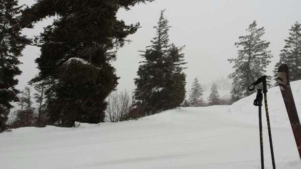 trees on the back are good. tons of snow coming in tonight