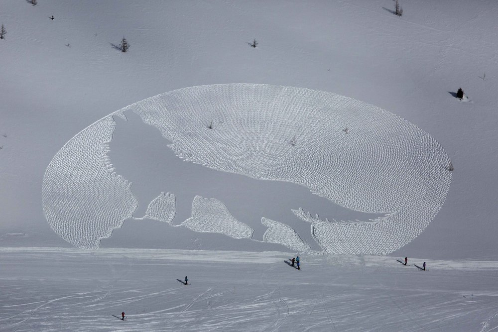 Snow artist Simon Beck stamped out the Howling Wolf design at Lake Louise in late February 2015. - ©Chris Moseley