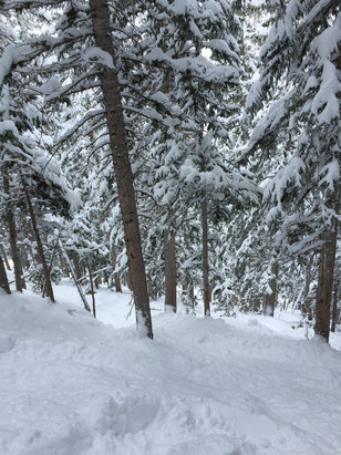 Snowbird - Epic... Waist deep in lots of areas. Sick day at the Bird.