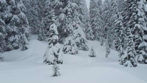 Big White - 50 cm of fresh powder since Saturday with 20 falling in the last 24 hours and she's still coming! skied all day today and I tell ya you can feel all 50 cm through the trees knee deep pow all day! keep it coming!