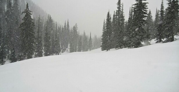 Whitefish Mountain Resort - way more than two inches on the back.  best snow of the season - ©local skier