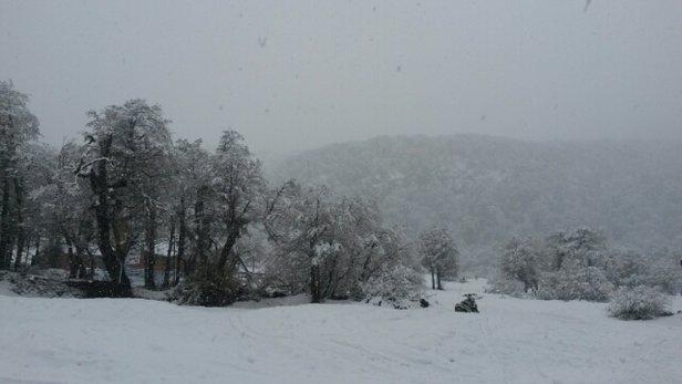 Nevados de Chillan - nevou todo o dia na base.  - ©14052.czimmer