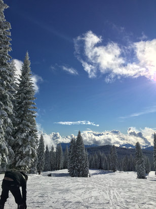 Mount Shasta Board & Ski Park - Awesome day! So much nice pow pow!  - ©Jen B's iPhone