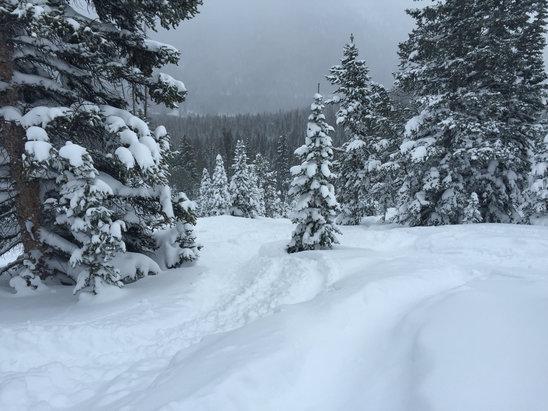 Monarch Mountain - Firsthand Ski Report - ©drishti
