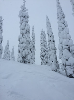 Fernie Alpine - Awesome day lots of snow   - ©Johannes A Steudel
