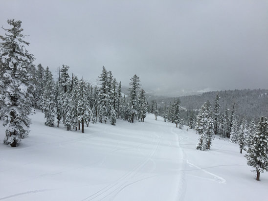 Boreal Mountain Resort - Loads of snow after this early Jan storm. Heavy powder and granular today, a joy to ride but a little slow. Ridiculous amount of jumps and park features in effect.   - ©FatFinger