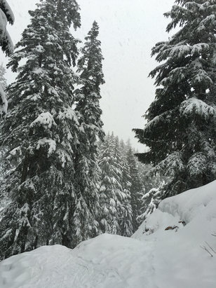 Mt Seymour - Snowshoe trail - ©Dawn's iPhone