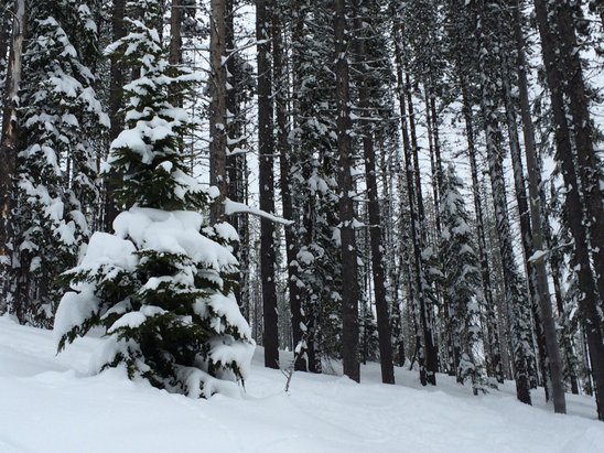 Lookout Pass Ski Area - Great snow on the mountain. Powder stashes everywhere. I'll be back for the weekend. - ©Taylor