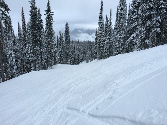 Revelstoke Mountain Resort - Great day (feb 13). Conditions were great for most of the mountain. They had 5cm which kept runs soft! Still a bunch of snow in the trees! Great day overall.  - ©Swizzcapz