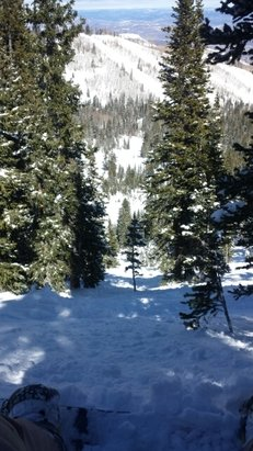 Park City - Tons of powder up McConkey lift in the trees and in the bowl. Great day to ride!!! - ©handley50