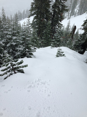 Squaw Valley - Alpine Meadows - Still some good fresh to be had and snowing now. Tomorrow might be excellent. - ©Feezo