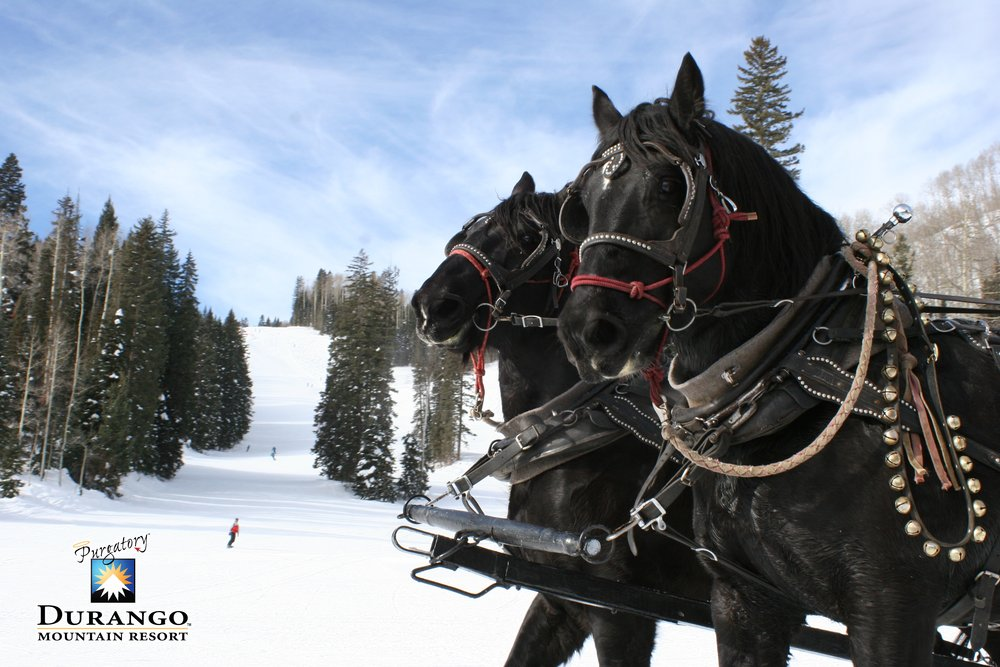 Sleigh horses Kate and Belle at Durango, CO.