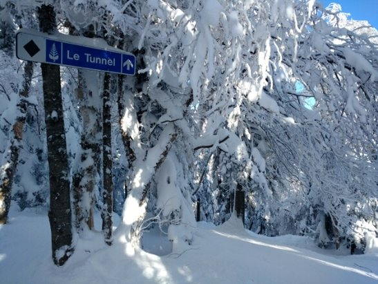 Tremblant - Glades shot  - ©stephlal7
