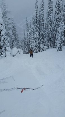 Whitewater Ski Resort - Major dumps since Christmas. The glades contained many pillows to pop off of. Watch for tree wells though. There is a knarly creek below just waiting to soak your boot. Tons of Americans loving it here.    - ©mmoosbauer7