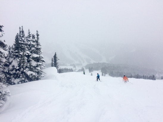Sunshine Village - Great day of nice soft turns. Clouds and snow moved in and out through the day. Got there early enough to avoid the parking disaster, sounds like sunshine has finally grown too big  - ©kj891