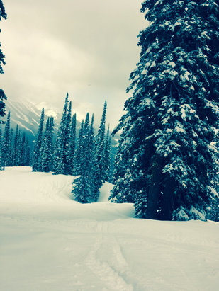 Fernie Alpine - Sick day at the hill today, found fresh tracks until 4:15 - ©Jackson's iPhone