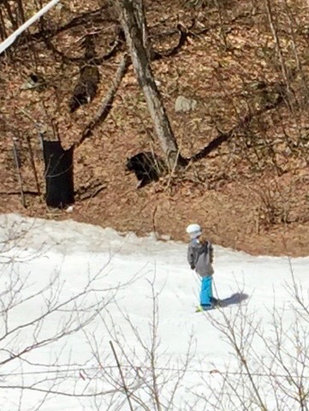 Killington Resort - Black bear came out to enjoy last day of canyon are with us. Sun, soft moguls and plenty of snow. Fantastic! - ©Diveandski