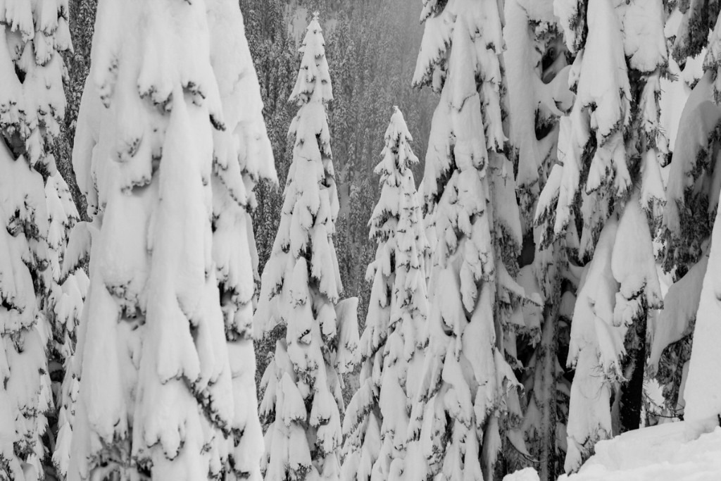 Snow ghosted trees atop the ski area