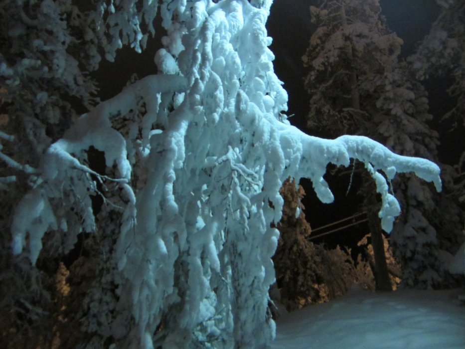 Ghostly trees in Lapland