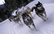 Dog sledders at Breckenridge, CO.