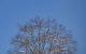 REPRODUCTION INTERDITE SANS AUTORISATION DE L'AUTEUR.COPYRIGHT:JP NOISILLIER/nuts.fr.à coté de chaque photo publiéePour toute utilisation veuillez prendre contact: info@nuts.fr - For all information : info@nuts.fr