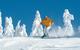 Skier - Styria Tourism