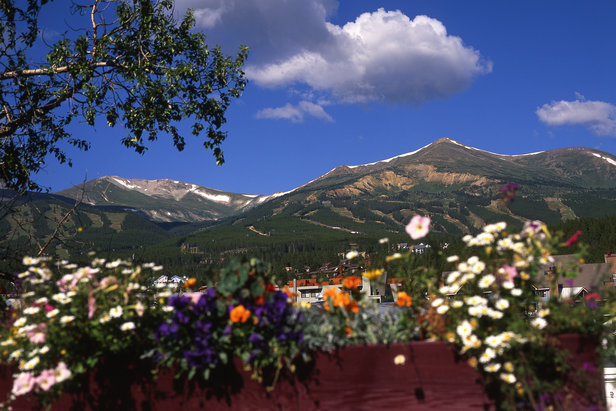 Flowers provide a splash of color during the summertime in Summit County. Photo by Leisa Gibson