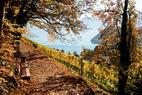 Wanderweg bei Interlaken