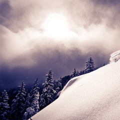 Taos Powder