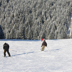 Piste Ski Alpin Ovifat