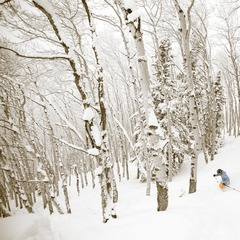 Get first tracks in Steamboat's legendary aspens from the Thunderhead Express quad