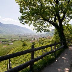 Montagna d'estate: Merano e dintorni...