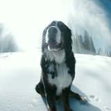 Loveland snow dog - ©Dustin Schaefer
