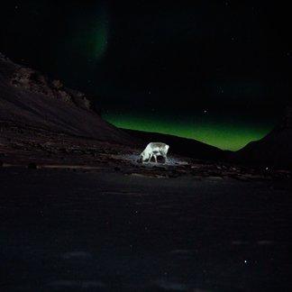 Skikjøring på Svalbard - © Vigdis Skogly