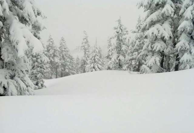 22cm overnight, 41 in last 48. Great riding in the morning, skied out to the ice below by the afternoon