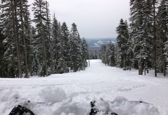 Tons of fun powder! But hard underneath. just dont fall. and stay along the treeline. ;) fun day!